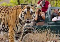 Golden Triangle with Tiger Safari